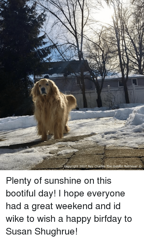 Bootiful: Copyright 2017 Ray Chartes The Golden Retriever O. Plenty of sunshine on this bootiful day! I hope everyone had a great weekend and id wike to wish a happy birfday to Susan Shughrue!
