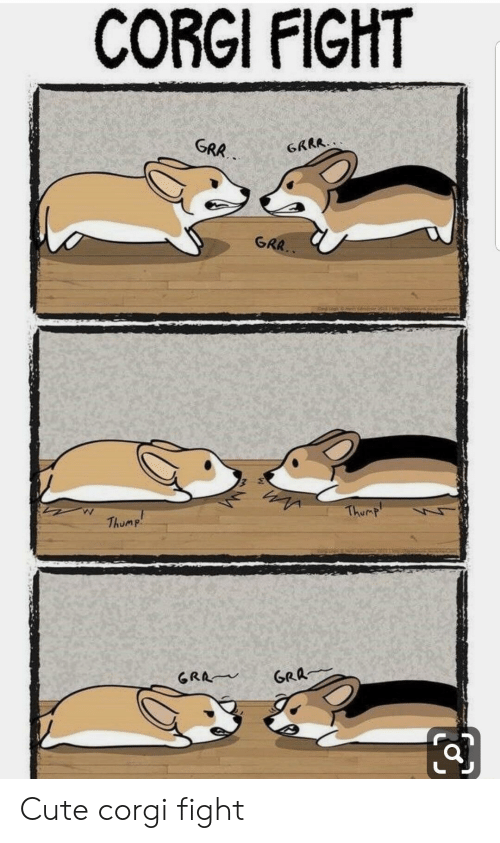 Corgi, Cute, and Fight: CORGI FIGHT  GRA  GRR Cute corgi fight