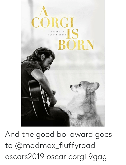 9gag, Corgi, and Memes: CORGI  IS  BORN  MAXINE THE  FLUFFY CORGI And the good boi award goes to @madmax_fluffyroad - oscars2019 oscar corgi 9gag