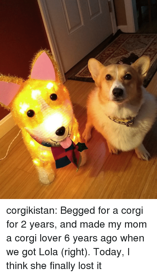 lola: corgikistan:  Begged for a corgi for 2 years, and made my mom a corgi lover 6 years ago when we got Lola (right). Today, I think she finally lost it