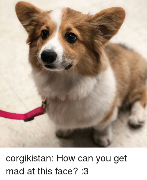 This Face: corgikistan:  How can you get mad at this face? :3