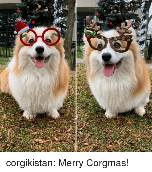 Tumblr, Blog, and Com: corgikistan:  Merry Corgmas!