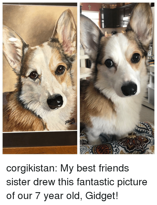 Friends, Tumblr, and Best: corgikistan:  My best friends sister drew this fantastic picture of our 7 year old, Gidget!