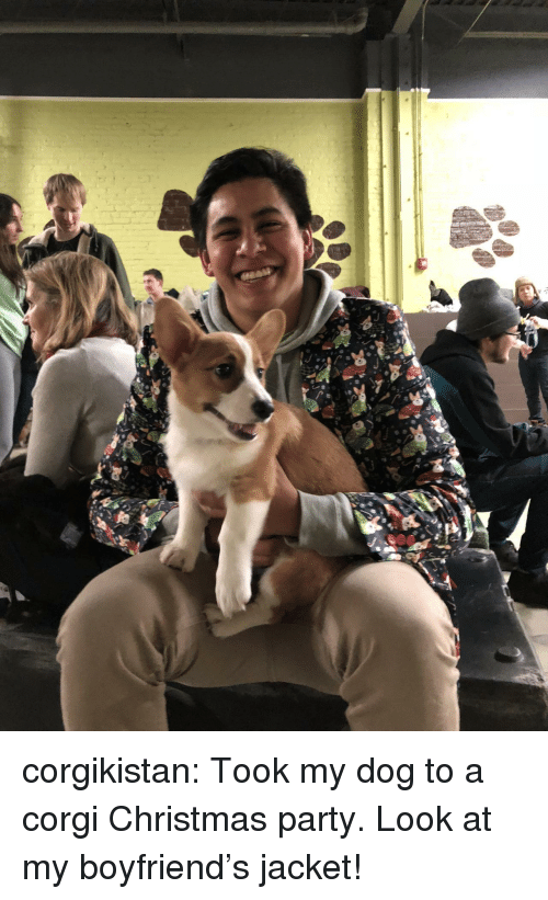 Christmas, Corgi, and Party: corgikistan:  Took my dog to a corgi Christmas party. Look at my boyfriend's jacket! �