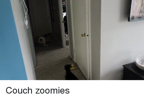 Zoomies: Couch zoomies