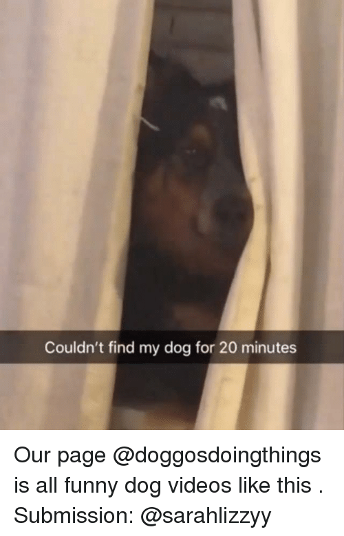 Funny, Videos, and Dank Memes: Couldn't find my dog for 20 minutes Our page @doggosdoingthings is all funny dog videos like this . Submission: @sarahlizzyy