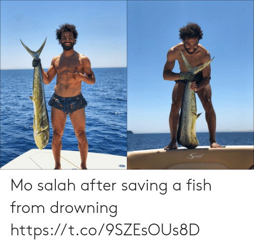 Memes, Fish, and 🤖: Cout Mo salah after saving a fish from drowning https://t.co/9SZEsOUs8D