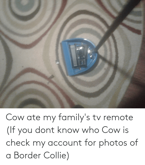 remote: Cow ate my family's tv remote (If you dont know who Cow is check my account for photos of a Border Collie)