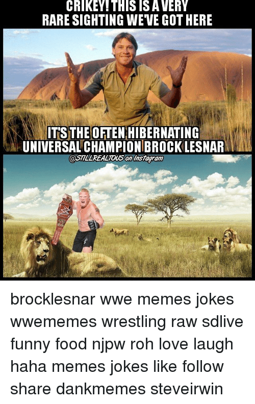 Wwe Memes: CRIKEY THIS ISA VERY  RARE SIGHTING WEVE GOTHERE  ITS THE OFTEN HIBERNATING  UNIVERSAL CHAMPIONBROCKLESNARMML  @STLLREALTOUS On liistagram brocklesnar wwe memes jokes wwememes wrestling raw sdlive funny food njpw roh love laugh haha memes jokes like follow share dankmemes steveirwin
