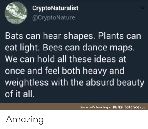 shapes: CryptoNaturalist  @CryptoNature  Bats can hear shapes. Plants can  eat light. Bees can dance maps.  We can hold all these ideas at  once and feel both heavy and  weightless with the absurd beauty  of it all.  See what's trending at FUNSubstance.com Amazing