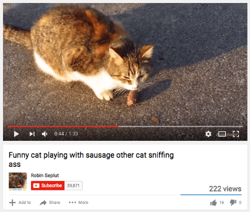 funny cat: ct  0:44/133  Funny cat playing with sausage other cat sniffing  ass  abschibe 39,871  222 view:s  Add toShare...  16