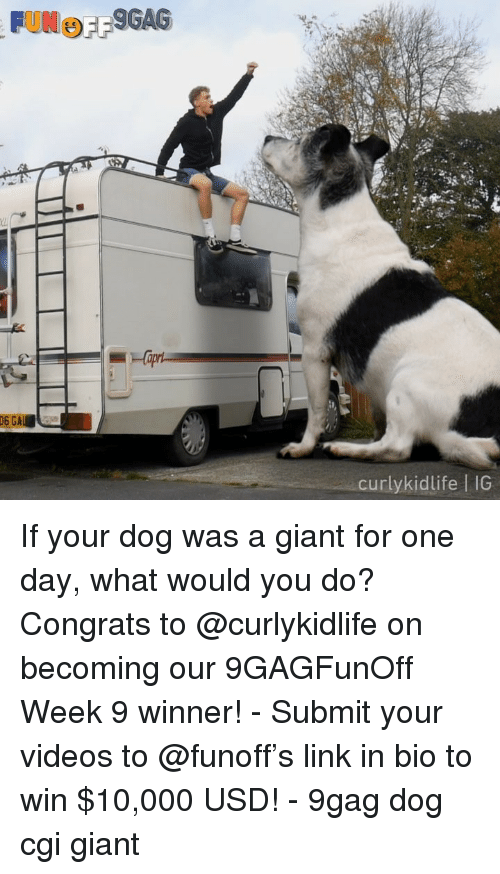 9gag, Memes, and Videos: curlykidlife I IG If your dog was a giant for one day, what would you do? Congrats to @curlykidlife on becoming our 9GAGFunOff Week 9 winner! - Submit your videos to @funoff's link in bio to win $10,000 USD! - 9gag dog cgi giant