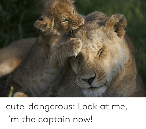 Look At Me Im The Captain: cute-dangerous:  Look at me, I'm the captain now!