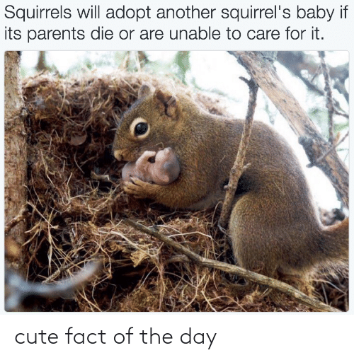 The Day: cute fact of the day