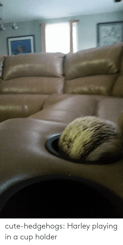 Cup Holder: cute-hedgehogs:  Harley playing in a cup holder