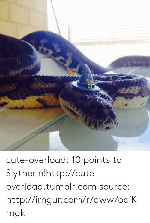 10 Points: cute-overload:  10 points to Slytherin!http://cute-overload.tumblr.com source: http://imgur.com/r/aww/oqiKmgk
