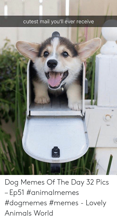Animals, Memes, and Mail: cutest mail you'll ever receive  trinketa Dog Memes Of The Day 32 Pics – Ep51 #animalmemes #dogmemes #memes - Lovely Animals World