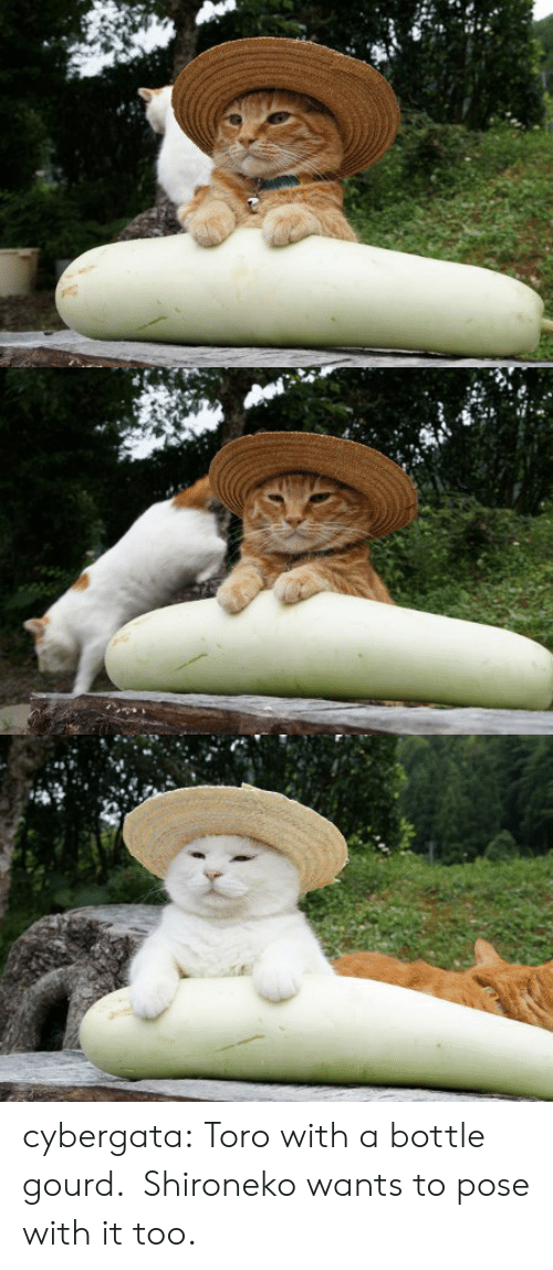toro: cybergata:  Toro with a bottle gourd. Shironeko wants to pose with it too.   ゆうがお