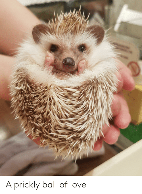 Love, Ball, and Prickly: D A prickly ball of love