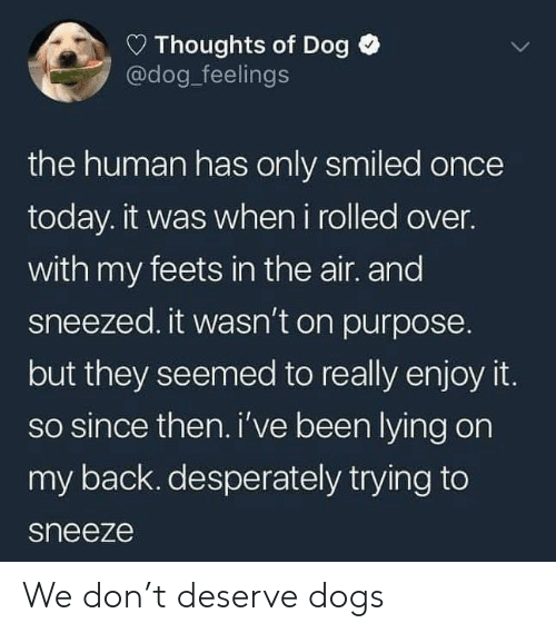 Dogs, Today, and Lying: D Thoughts of Dog  @dog_feelings  the human has only smiled once  today. it was when i rolled over.  with my feets in the air. and  sneezed. it wasn't on purpose.  but they seemed to really enjoy it.  so since then.i've been lying on  my back. desperately trying to  sneeze We don't deserve dogs