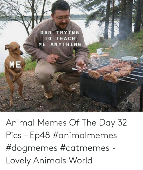 Animals, Dad, and Memes: DAD TRYING  TO TEACH  ME ANYTHING  ME Animal Memes Of The Day 32 Pics – Ep48 #animalmemes #dogmemes #catmemes - Lovely Animals World
