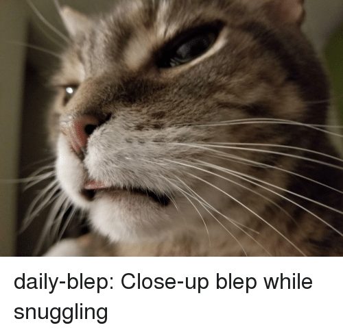 Tumblr, Blog, and Com: daily-blep:  Close-up blep while snuggling