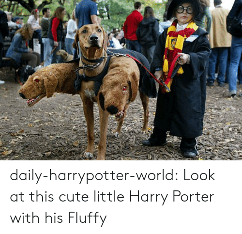Cute Little: daily-harrypotter-world:  Look at this cute little Harry Porter with his Fluffy