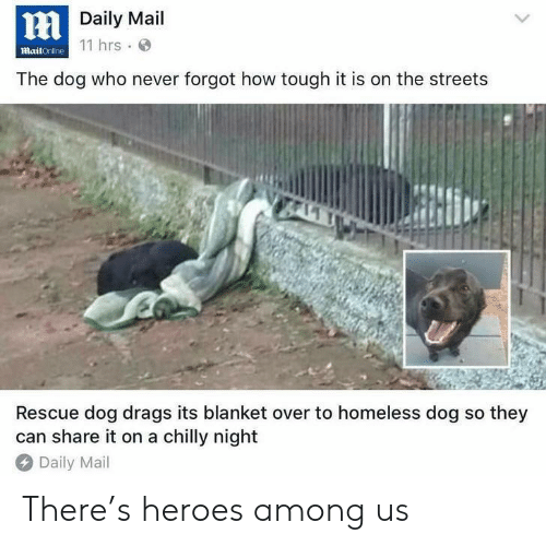 Mailonline: Daily Mail  11 hrs  mailOnline  The dog who never forgot how tough it is on the streets  Rescue dog drags its blanket over to homeless dog so they  can share it on a chilly night  Daily Mail There's heroes among us