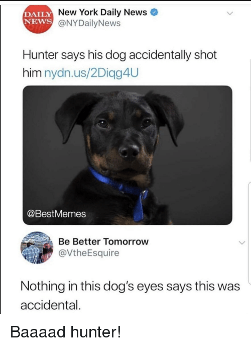 Dogs, New York, and News: DAILY  NEWS  New York Daily News  @NYDailyNews  Hunter says his dog accidentally shot  him nydn.us/2Diagg4UU  @BestMemes  Be Better Tomorrow  @VtheEsquire  Nothing in this dog's eyes says this was  accidental. Baaaad hunter!