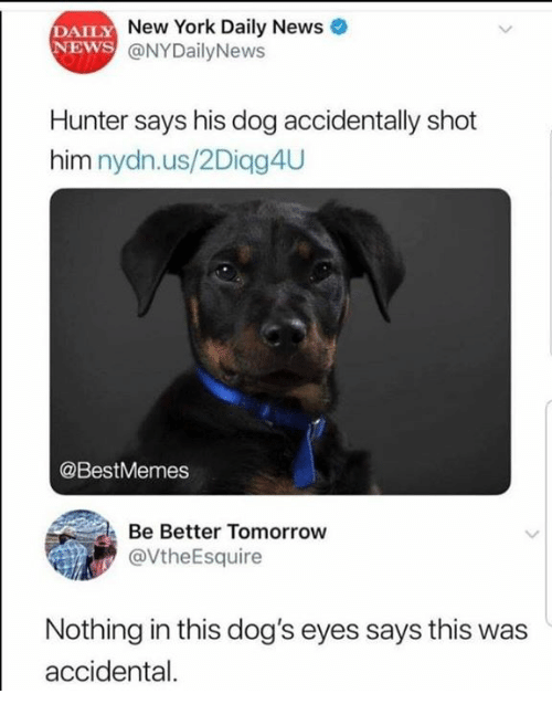 Dank, Dogs, and New York: DAILY  NEWS  New York Daily News  @NYDailyNews  Hunter says his dog accidentally shot  him nydn.us/2Diqg4U  @BestMemes  Be Better Tomorrow  @VtheEsquire  Nothing in this dog's eyes says this was  accidental