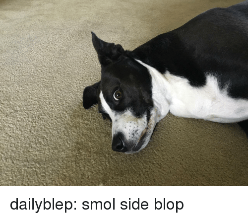 Tumblr, Blog, and Http: dailyblep:  smol side blop