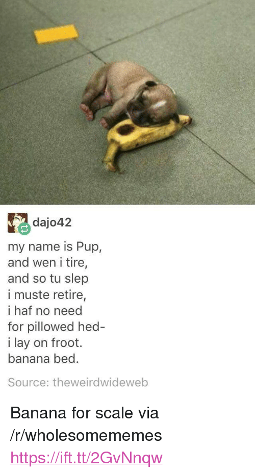 """For Scale: dajo42  my name is Pup,  and wen i tire,  and so tu slep  i muste retire,  i haf no need  for pillowed hed  i lay on froot.  banana bed.  Source: theweirdwideweb <p>Banana for scale via /r/wholesomememes <a href=""""https://ift.tt/2GvNnqw"""">https://ift.tt/2GvNnqw</a></p>"""