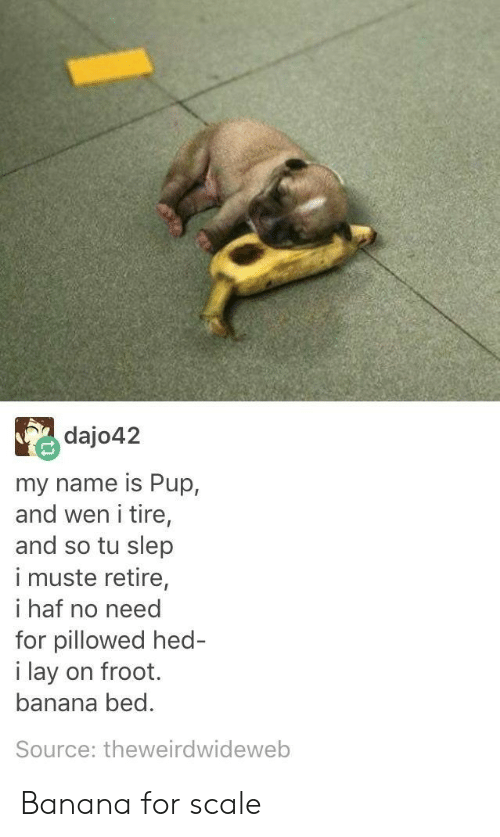 For Scale: dajo42  my name is Pup,  and wen i tire,  and so tu slep  i muste retire,  i haf no need  for pillowed hed  i lay on froot.  banana bed.  Source: theweirdwideweb Banana for scale