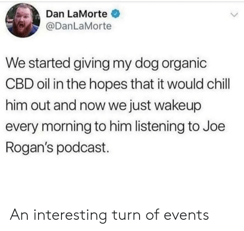 Chill, Dog, and Podcast: Dan LaMorte  @DanLaMorte  We started giving my dog organic  CBD oil in the hopes that it would chill  him out and now we just wakeup  every morning to him listening to Joe  Rogan's podcast An interesting turn of events