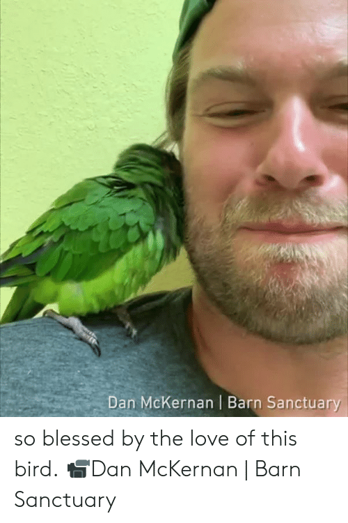 Blessed, Dank, and Love: Dan McKernan | Barn Sanctuary so blessed by the love of this bird.  📹Dan McKernan | Barn Sanctuary