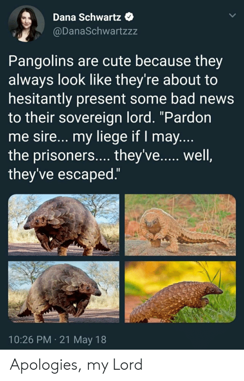 "Bad, Cute, and News: Dana Schwartz  @DanaSchwartzzz  Pangolins are cute because they  always look like they're about to  hesitantly present some bad news  to their sovereign lord. ""Pardon  me sire... my liege if I may  the prisoners.... they've...., well  they've escaped  10:26 PM 21 May 18 Apologies, my Lord"