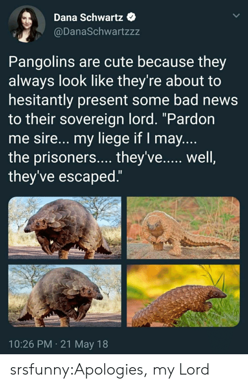 "Schwartz: Dana Schwartz  @DanaSchwartzzz  Pangolins are cute because they  always look like they're about to  hesitantly present some bad news  to their sovereign lord. ""Pardon  me sire... my liege if I may  the prisoners.... they've...., well  they've escaped  10:26 PM 21 May 18 srsfunny:Apologies, my Lord"