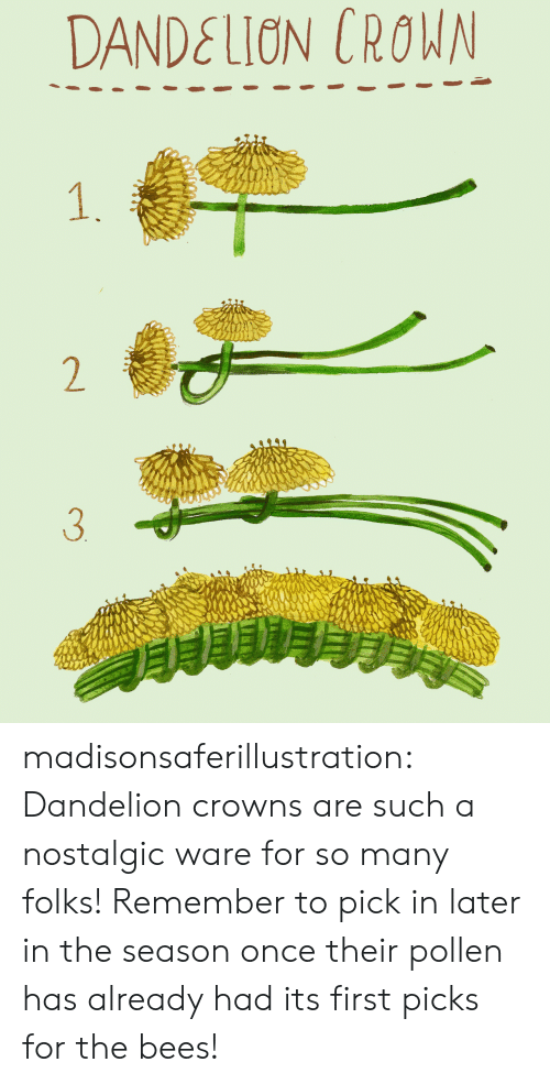Pick In: DANDELION CROWN  1.  2  3 madisonsaferillustration: Dandelion crowns are such a nostalgic ware for so many folks! Remember to pick in later in the season once their pollen has already had its first picks for the bees!