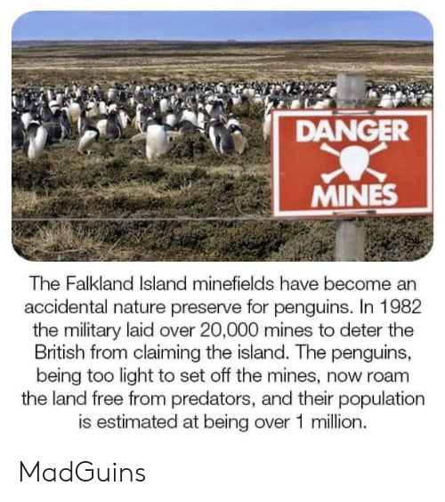 Free, Nature, and Penguins: DANGER  MINES  The Falkland Island minefields have become an  accidental nature preserve for penguins. In 1982  the military laid over 20,000 mines to deter the  British from claiming the island. The penguins,  being too light to set off the mines, now roam  the land free from predators, and their population  is estimated at being over 1 million MadGuins
