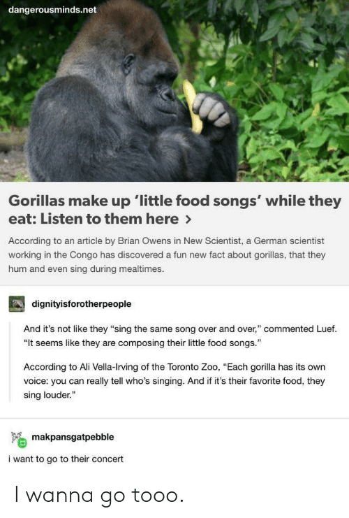 "Toronto: dangerousminds.net  Gorillas make up 'little food songs' while they  eat: Listen to them here>  According to an article by Brian Owens in New Scientist, a German scientist  working in the Congo has discovered a fun new fact about gorillas, that they  hum and even sing during mealtimes  dignityisforotherpeople  And it's not like they ""sing the same song over and over,"" commented Luef.  ""It seems like they are composing their little food songs.  According to Ali Vella-Irving of the Toronto Zoo, ""Each gorilla has its own  voice: you can really tell who's singing. And if it's their favorite food, they  sing louder.""  makpansgatpebble  i want to go to their concert I wanna go tooo."