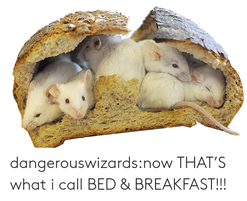 Now Thats: dangerouswizards:now THAT'S what i call BED & BREAKFAST!!!