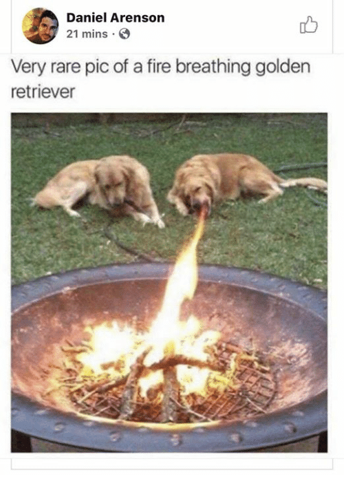 Fire, Funny, and Tumblr: Daniel Arenson  21 mins S  Very rare pic of a fire breathing golden  retriever
