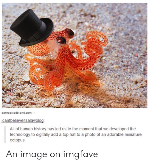 History, Image, and Octopus: darkroastedblend.com  icantbelieveitsalawblog:  All of human history has led us to the moment that we developed the  technology to digitally add a top hat to a photo of an adorable miniature  octopus An image on imgfave