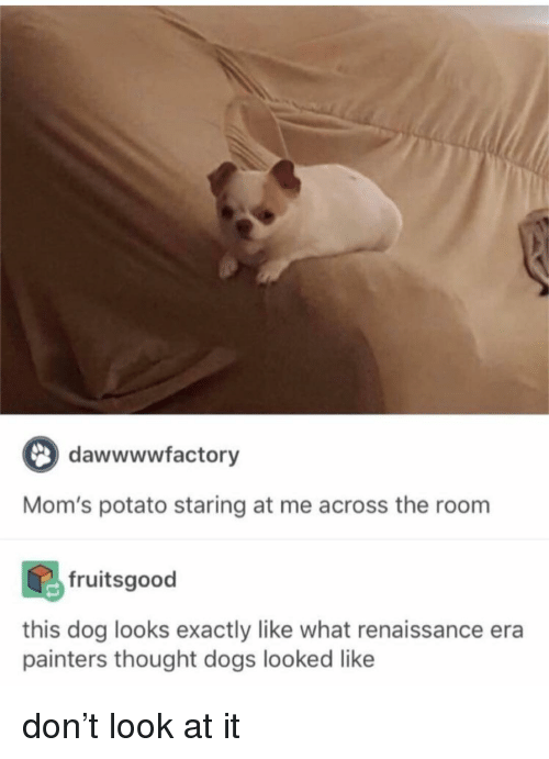 painters: dawwwwfactory  Mom's potato staring at me across the room  fruitsgood  this dog looks exactly like what renaissance era  painters thought dogs looked like don't look at it