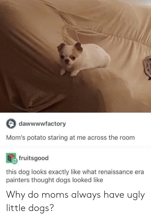 painters: dawwwwfactory  Mom's potato staring at me across the room  fruitsgood  this dog looks exactly like what renaissance era  painters thought dogs looked like Why do moms always have ugly little dogs?