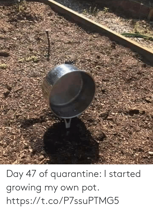 Started: Day 47 of quarantine: I started growing my own pot. https://t.co/P7ssuPTMG5