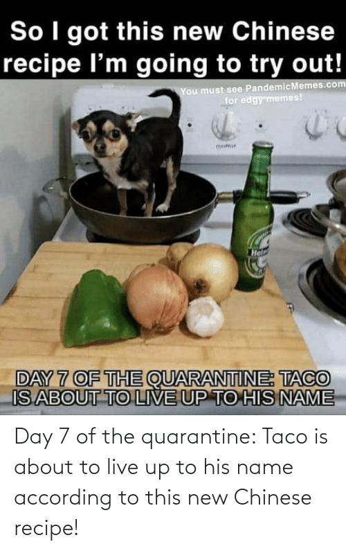 taco: Day 7 of the quarantine: Taco is about to live up to his name according to this new Chinese recipe!