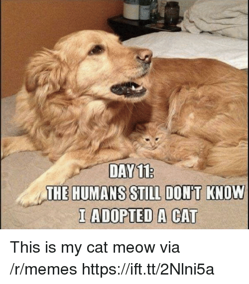 Memes, Cat, and Via: DAY11  I ADOPTED A CAT This is my cat meow via /r/memes https://ift.tt/2Nlni5a