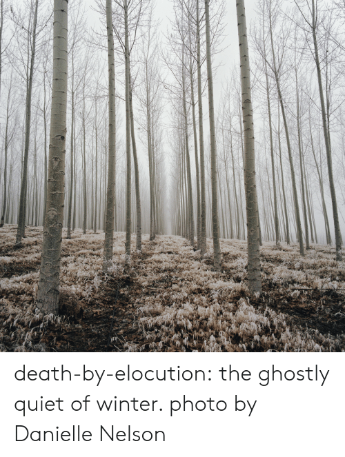 ghostly: death-by-elocution: the ghostly quiet of winter. photo by Danielle Nelson
