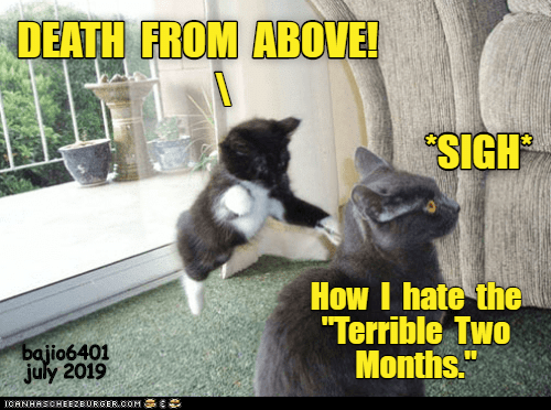 """Death, How, and July: DEATH FROM ABOVE!  SIGH  How I hate the  """"Terrible Two  Months.""""  bajio6401  july 2019  ICANHASCHEEZBURGER.OOM C"""